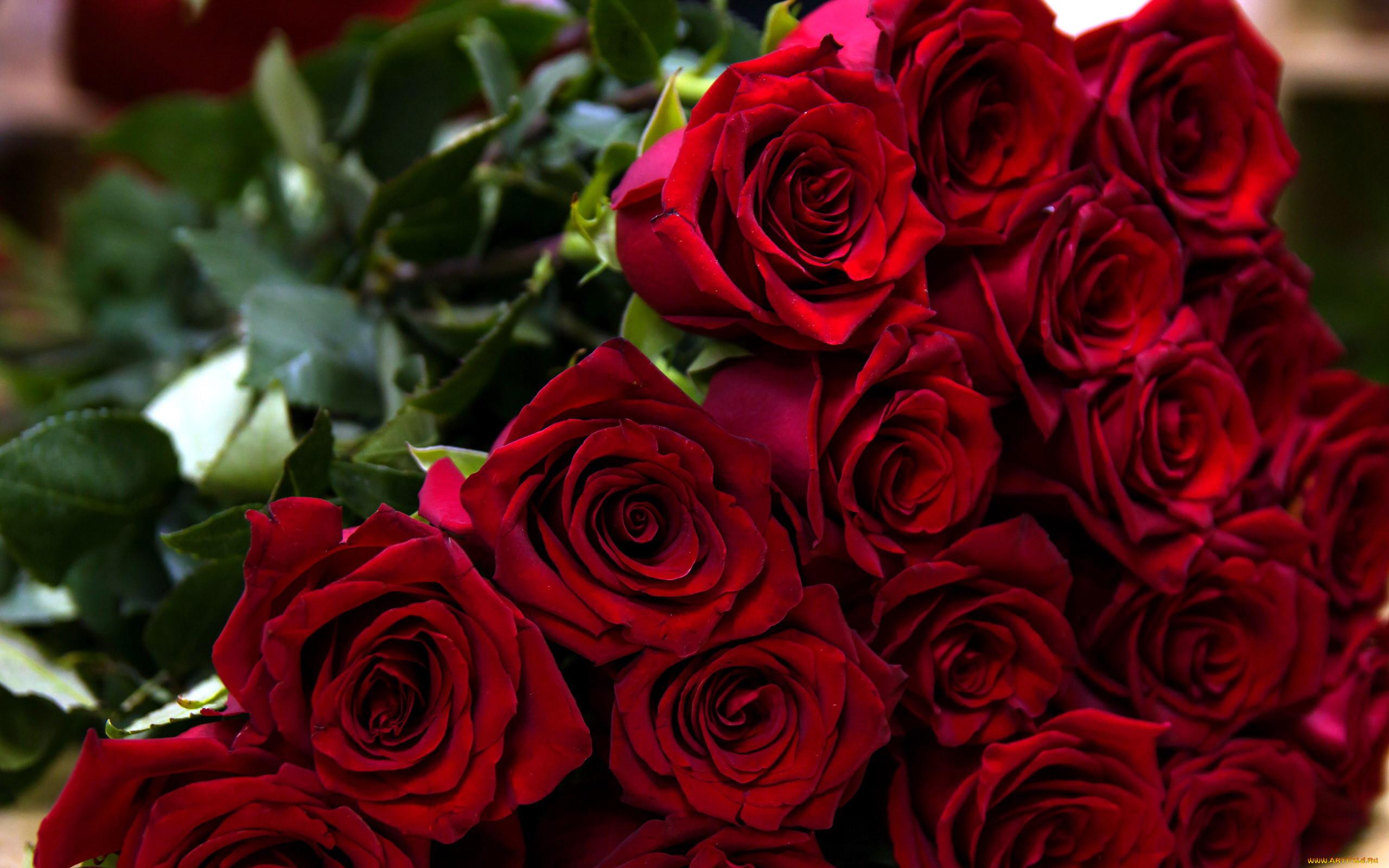 это картинки цветы розы бордовые букеты чтобы